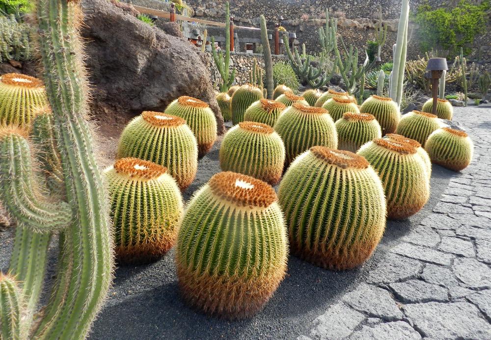 jardin-de-cactus Lanzarote